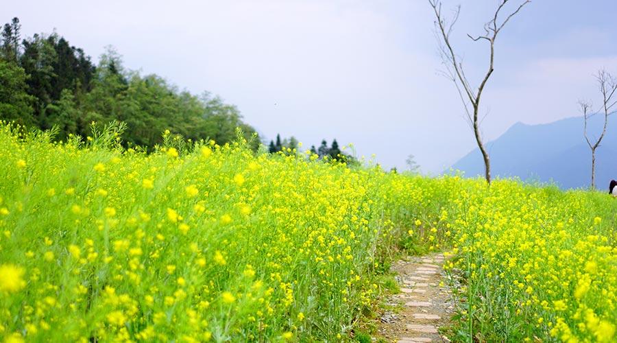 flowers on Fansipan