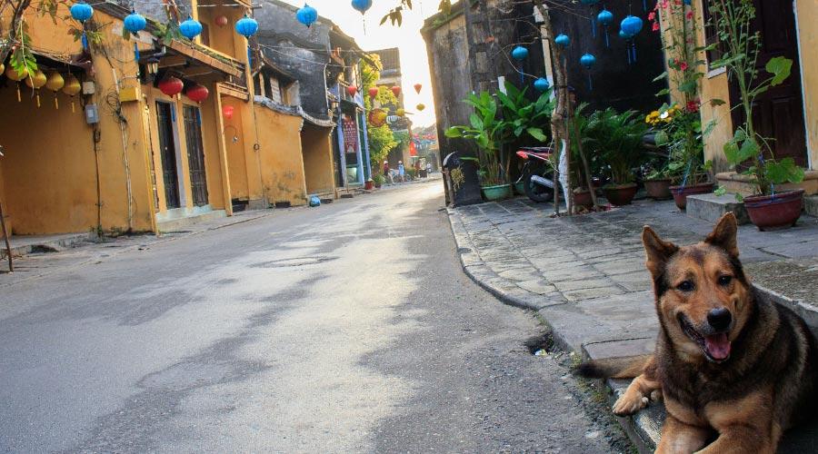 street dog; Vietnam vaccinations
