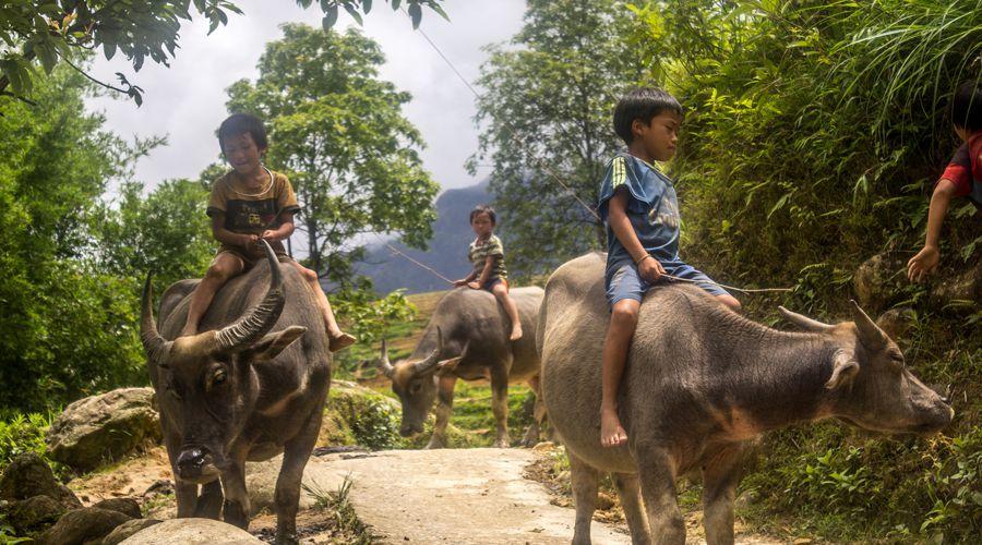 Ta Phin kids riding buffalo